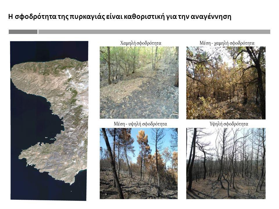Η σφοδρότητα της πυρκαγιάς είναι καθοριστική για την αναγέννηση