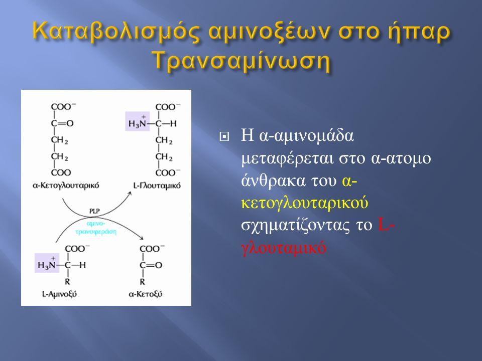 Η α - αμινομάδα μεταφέρεται στο α - ατομο άνθρακα του α - κετογλουταρικού σχηματίζοντας το L- γλουταμικό