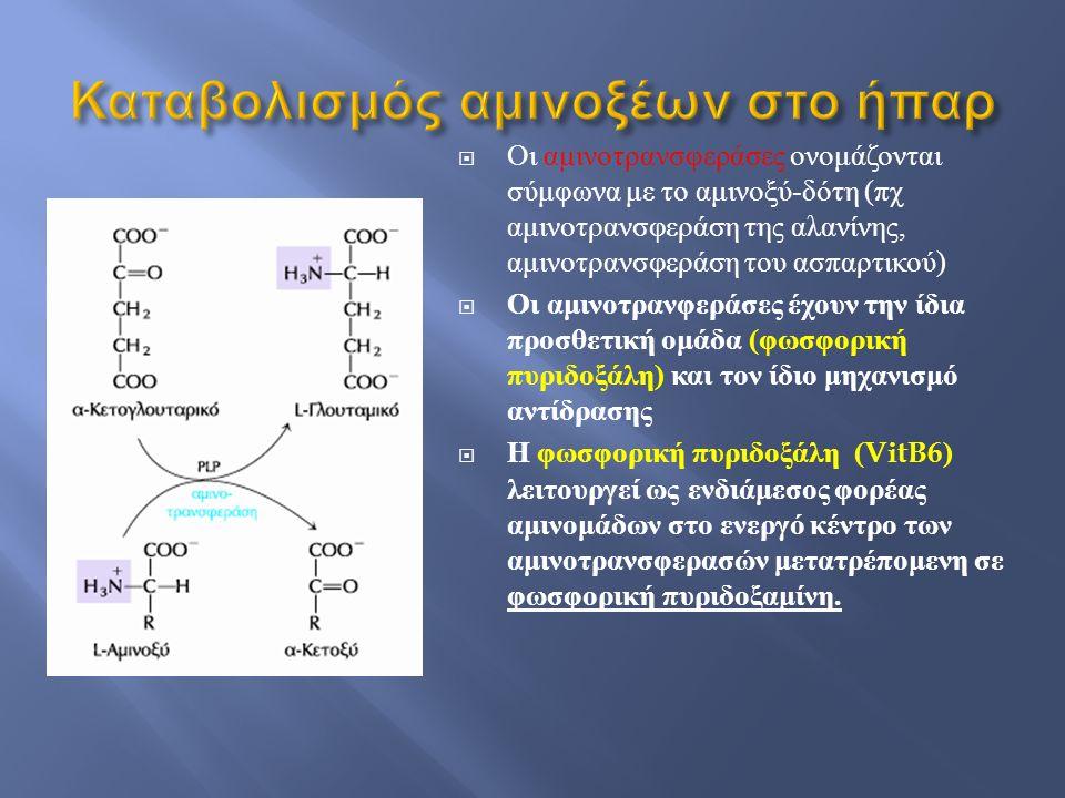  Οι αμινοτρανσφεράσες ονομάζονται σύμφωνα με το αμινοξύ - δότη ( πχ αμινοτρανσφεράση της αλανίνης, αμινοτρανσφεράση του ασπαρτικού )  Οι αμινοτρανφε
