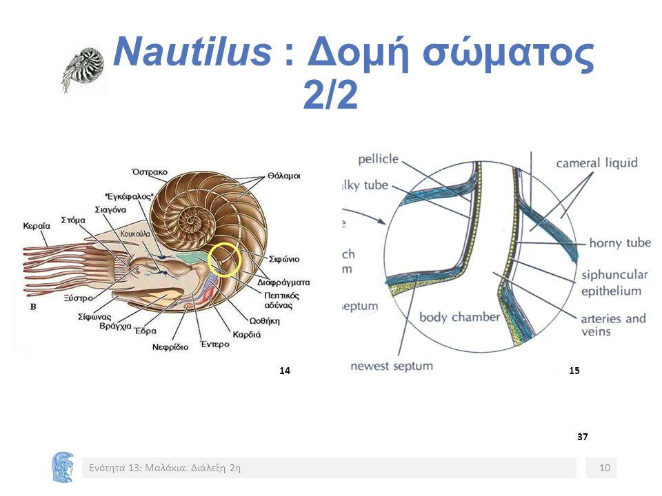 Nautilus : Δομή σώματος 2/2 Ενότητα 13: Μαλάκια. Διάλεξη 2η10 15151414 37