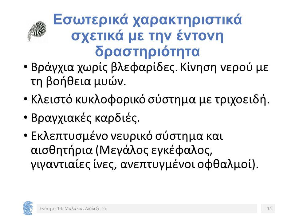 Εσωτερικά χαρακτηριστικά σχετικά με την έντονη δραστηριότητα Βράγχια χωρίς βλεφαρίδες.