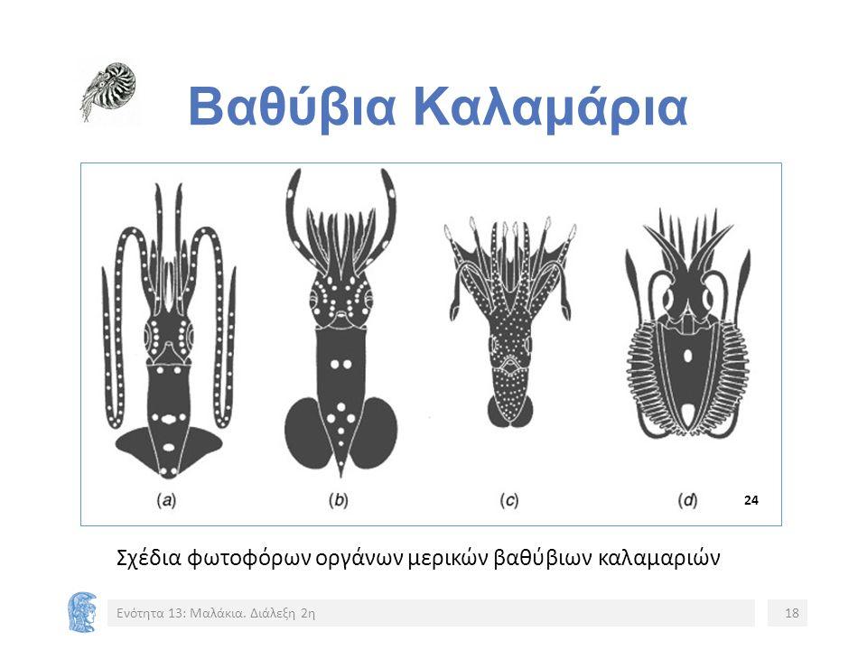 Βαθύβια Καλαμάρια Σχέδια φωτοφόρων οργάνων μερικών βαθύβιων καλαμαριών Ενότητα 13: Μαλάκια.
