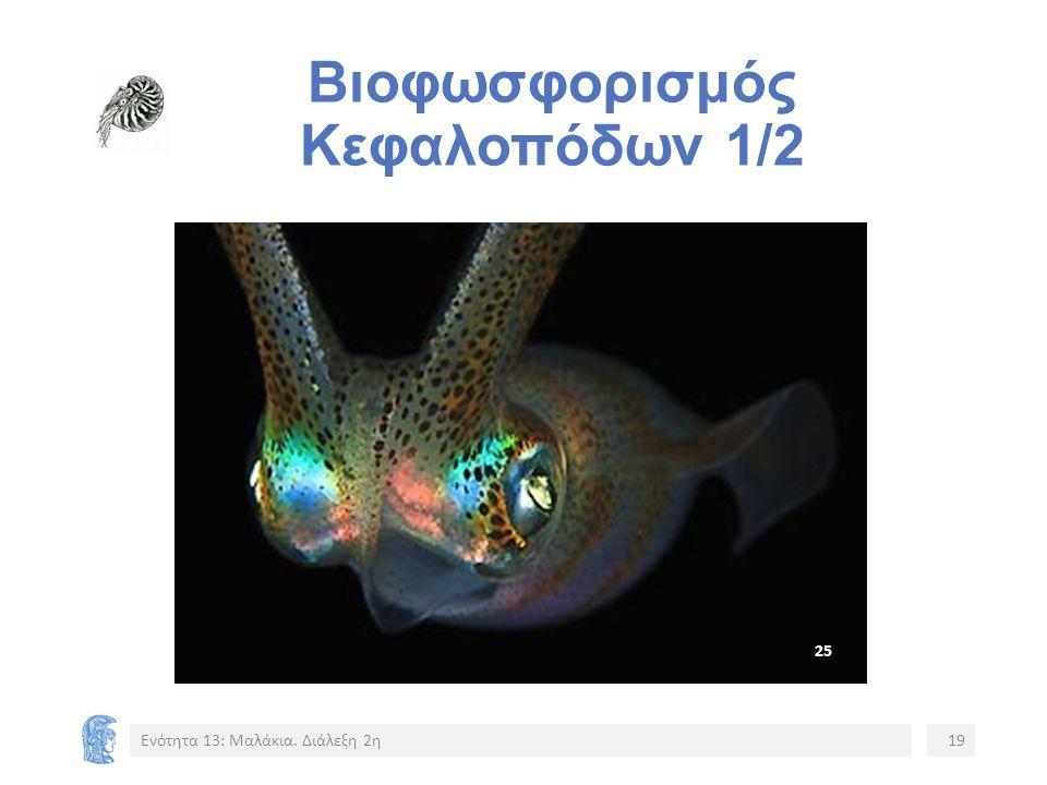 Βιοφωσφορισμός Κεφαλοπόδων 1/2 Ενότητα 13: Μαλάκια. Διάλεξη 2η19 2525