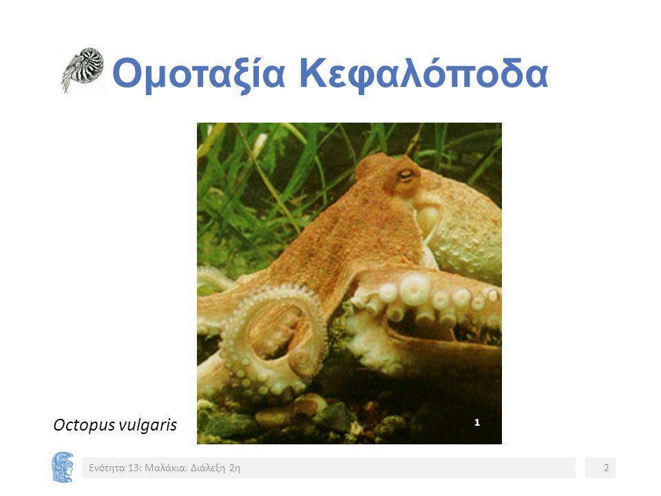Σημείωμα Χρήσης Έργων Τρίτων (2/9) Εικόνα 7: Εξέλιξη Κεφαλοπόδων.