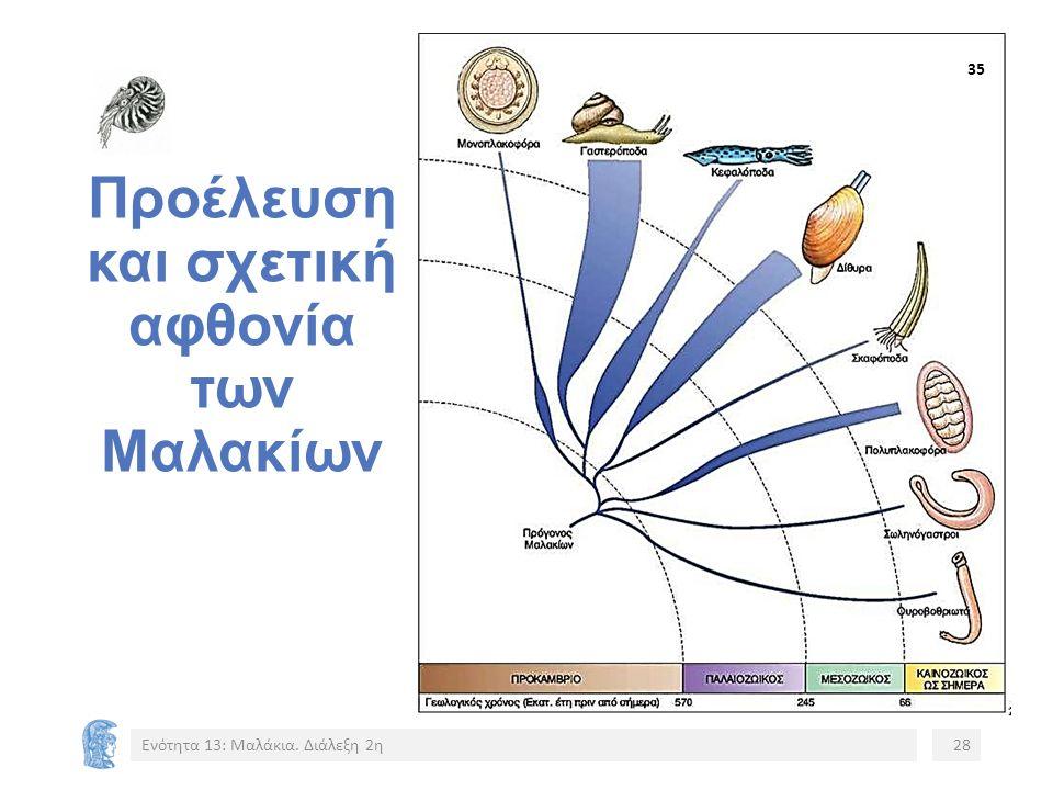 Προέλευση και σχετική αφθονία των Μαλακίων Ενότητα 13: Μαλάκια. Διάλεξη 2η28 3535