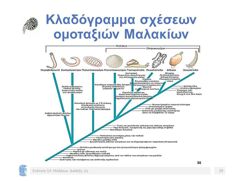 Κλαδόγραμμα σχέσεων ομοταξιών Μαλακίων 36 Ενότητα 13: Μαλάκια. Διάλεξη 2η29