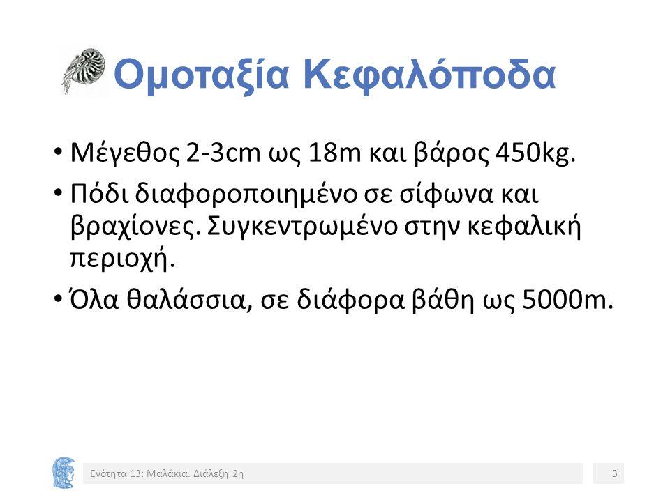 Ομοταξία Κεφαλόποδα Μέγεθος 2-3cm ως 18m και βάρος 450kg.