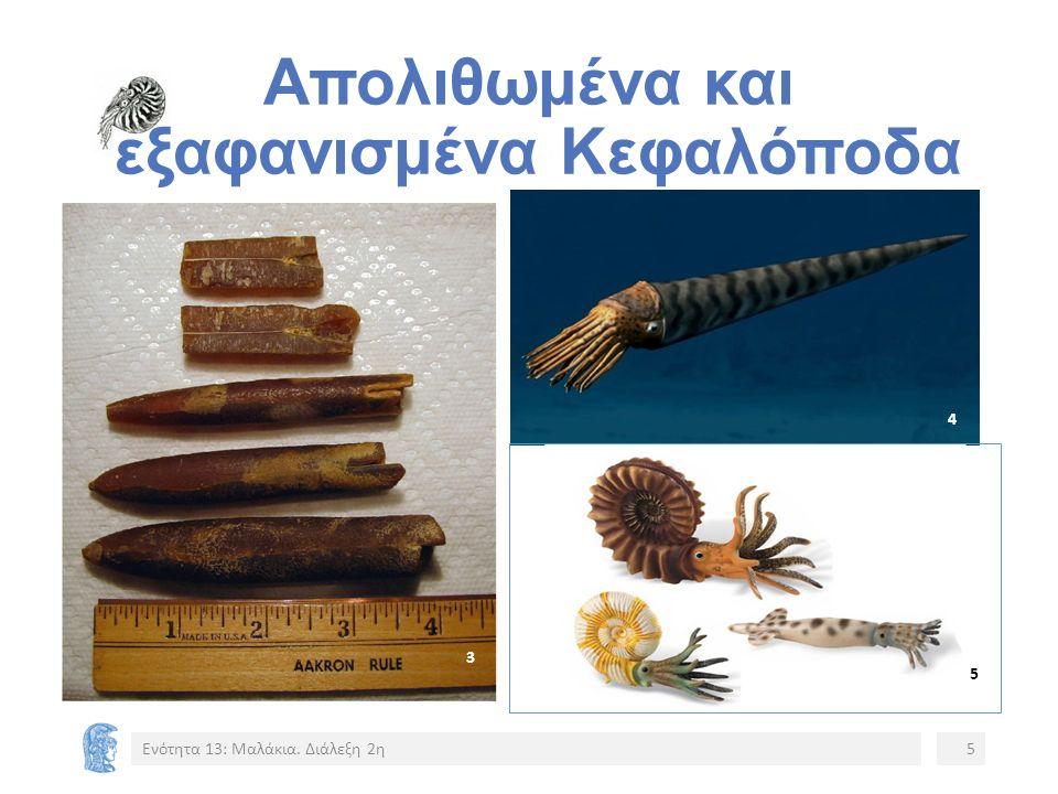 Απολιθωμένα και εξαφανισμένα Κεφαλόποδα Ενότητα 13: Μαλάκια. Διάλεξη 2η5 4 3 5