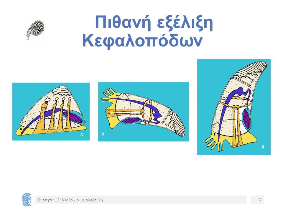Πιθανή εξέλιξη Κεφαλοπόδων Ενότητα 13: Μαλάκια. Διάλεξη 2η6 67 8