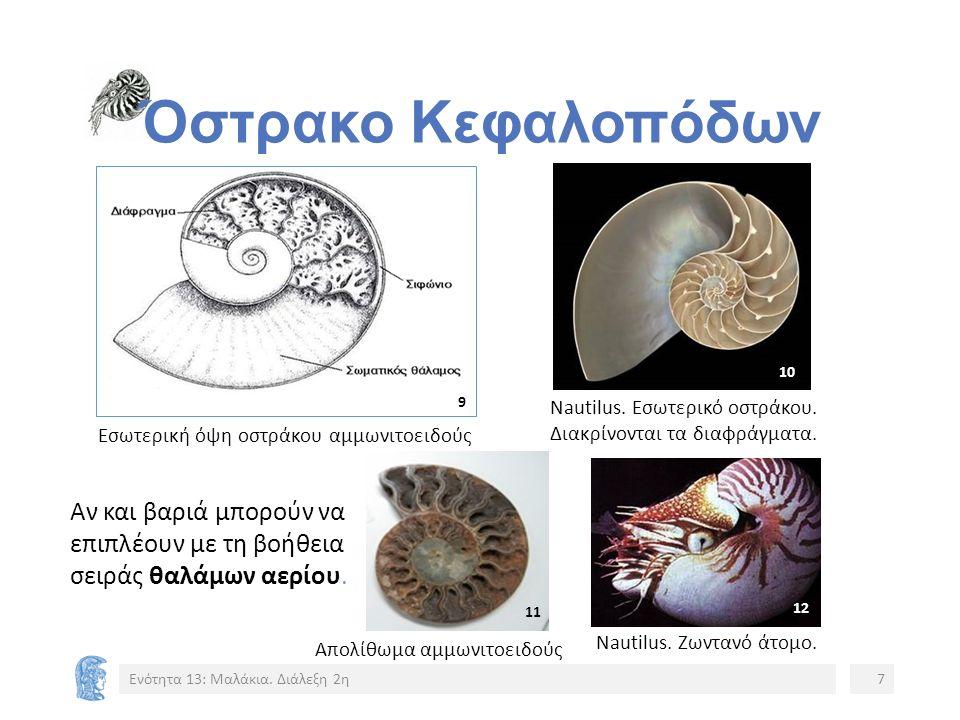 Κινήσεις Ναυτίλου Βίντεο 1: Nautilus, David Attenbrough https://www.youtube.com/watch?v=QMFqV4SJLWg Ενότητα 13: Μαλάκια.