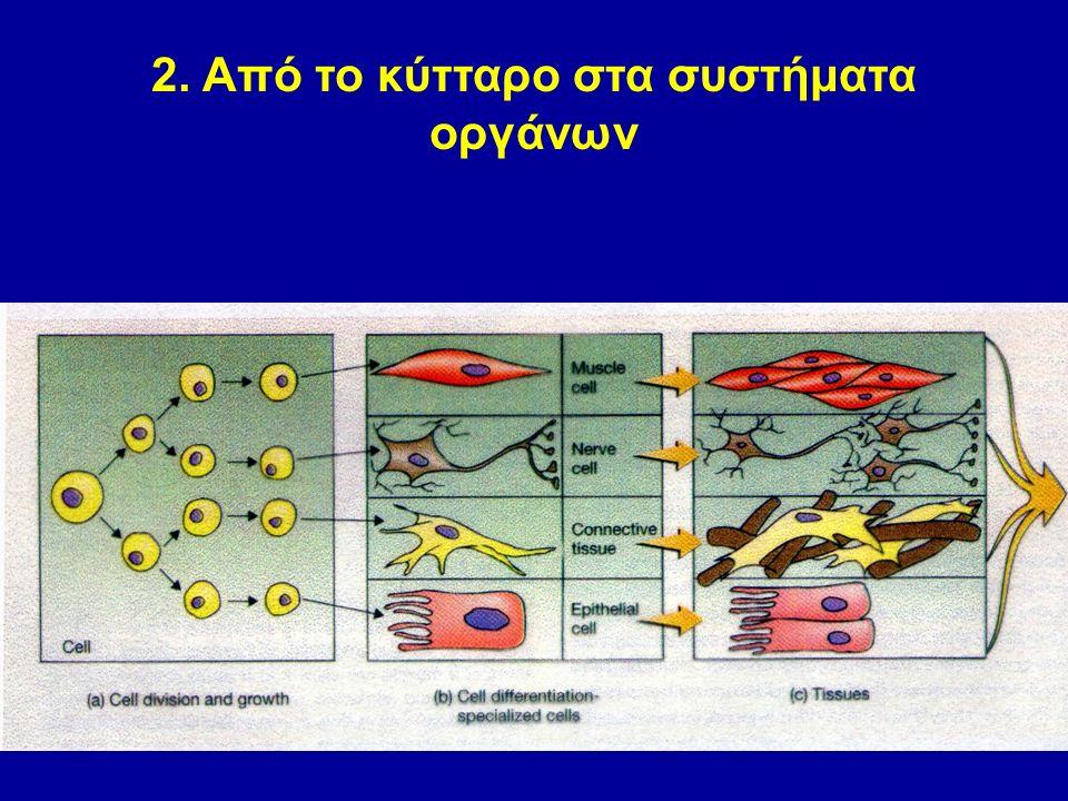 2. Από το κύτταρο στα συστήματα οργάνων