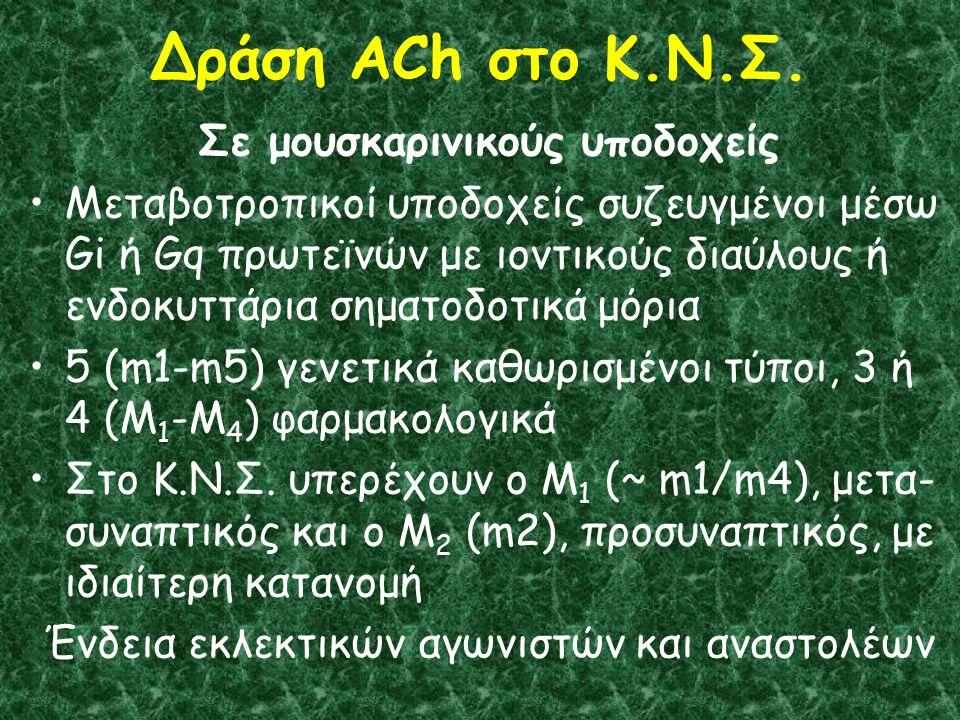Δράση ACh στο Κ.Ν.Σ.