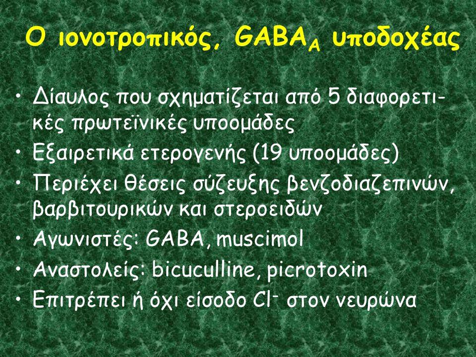 Ο ιονοτροπικός, GABA A υποδοχέας Δίαυλος που σχηματίζεται από 5 διαφορετι- κές πρωτεϊνικές υποομάδες Εξαιρετικά ετερογενής (19 υποομάδες) Περιέχει θέσεις σύζευξης βενζοδιαζεπινών, βαρβιτουρικών και στεροειδών Αγωνιστές: GABA, muscimol Αναστολείς: bicuculline, picrotoxin Επιτρέπει ή όχι είσοδο Cl - στον νευρώνα