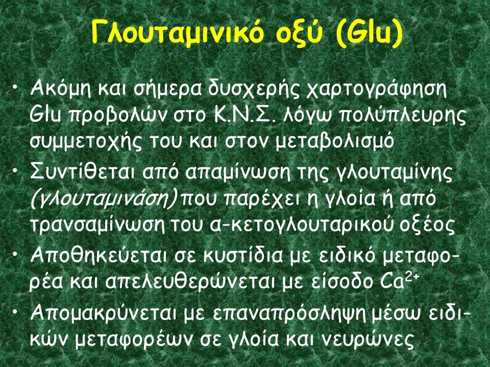 Γλουταμινικό οξύ (Glu) Ακόμη και σήμερα δυσχερής χαρτογράφηση Glu προβολών στο Κ.Ν.Σ.