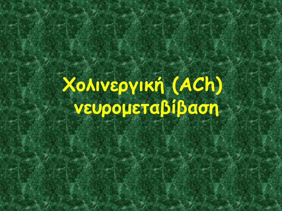 Χολινεργική (ACh) νευρομεταβίβαση