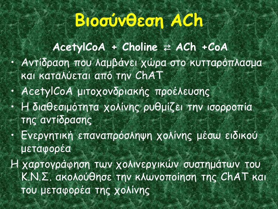Βιοσύνθεση ACh AcetylCoA + Choline ⇄ ACh +CoA Αντίδραση που λαμβάνει χώρα στο κυτταρόπλασμα και καταλύεται από την ChAT AcetylCoA μιτοχονδριακής προέλευσης Η διαθεσιμότητα χολίνης ρυθμίζει την ισορροπία της αντίδρασης Ενεργητική επαναπρόσληψη χολίνης μέσω ειδικού μεταφορέα Η χαρτογράφηση των χολινεργικών συστημάτων του Κ.Ν.Σ.