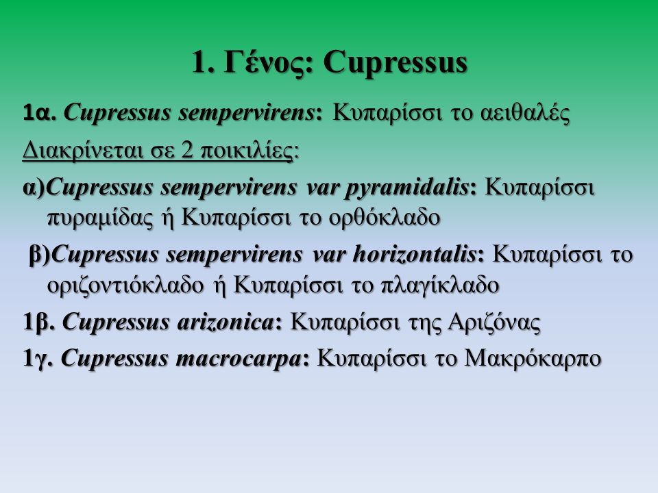 1.Γένος: Cupressus 1α.