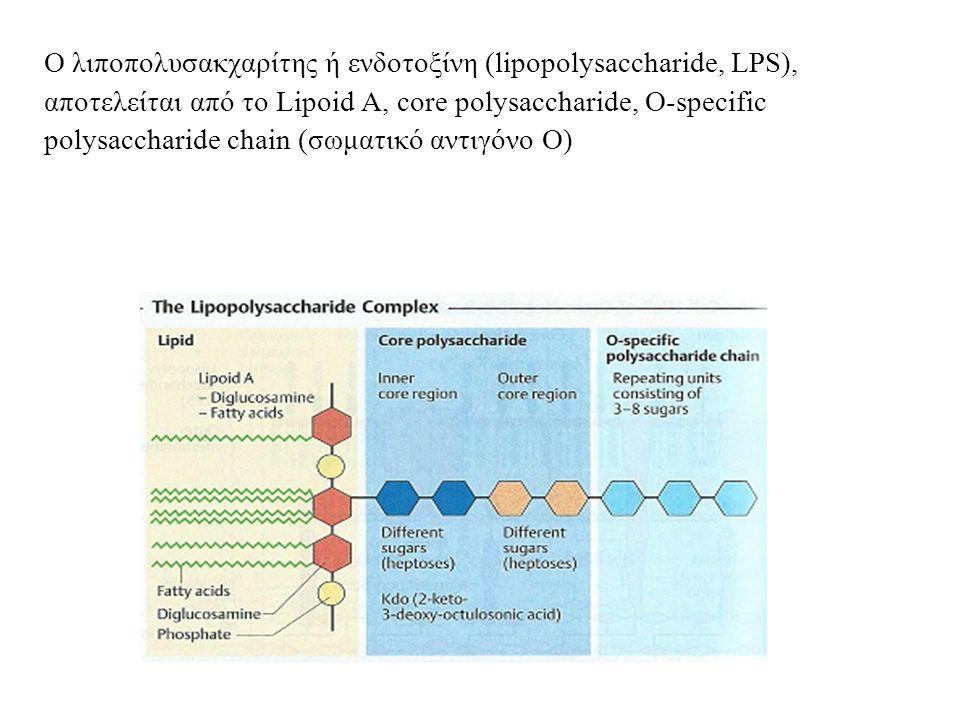 Ο λιποπολυσακχαρίτης ή ενδοτοξίνη (lipopolysaccharide, LPS), αποτελείται από το Lipoid A, core polysaccharide, O-specific polysaccharide chain (σωματικό αντιγόνο Ο)