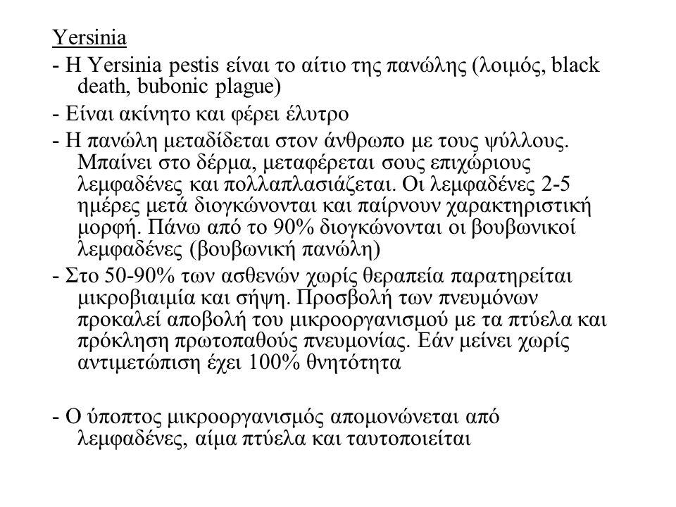 Yersinia - H Yersinia pestis είναι το αίτιο της πανώλης (λοιμός, black death, bubonic plague) - Είναι ακίνητο και φέρει έλυτρο - Η πανώλη μεταδίδεται στον άνθρωπο με τους ψύλλους.