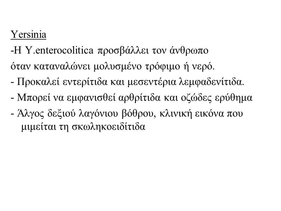 Yersinia -H Y.enterocolitica προσβάλλει τον άνθρωπο όταν καταναλώνει μολυσμένο τρόφιμο ή νερό. - Προκαλεί εντερίτιδα και μεσεντέρια λεμφαδενίτιδα. - Μ