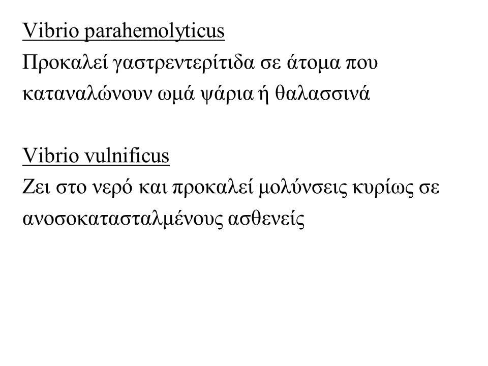 Vibrio parahemolyticus Προκαλεί γαστρεντερίτιδα σε άτομα που καταναλώνουν ωμά ψάρια ή θαλασσινά Vibrio vulnificus Ζει στο νερό και προκαλεί μολύνσεις κυρίως σε ανοσοκατασταλμένους ασθενείς