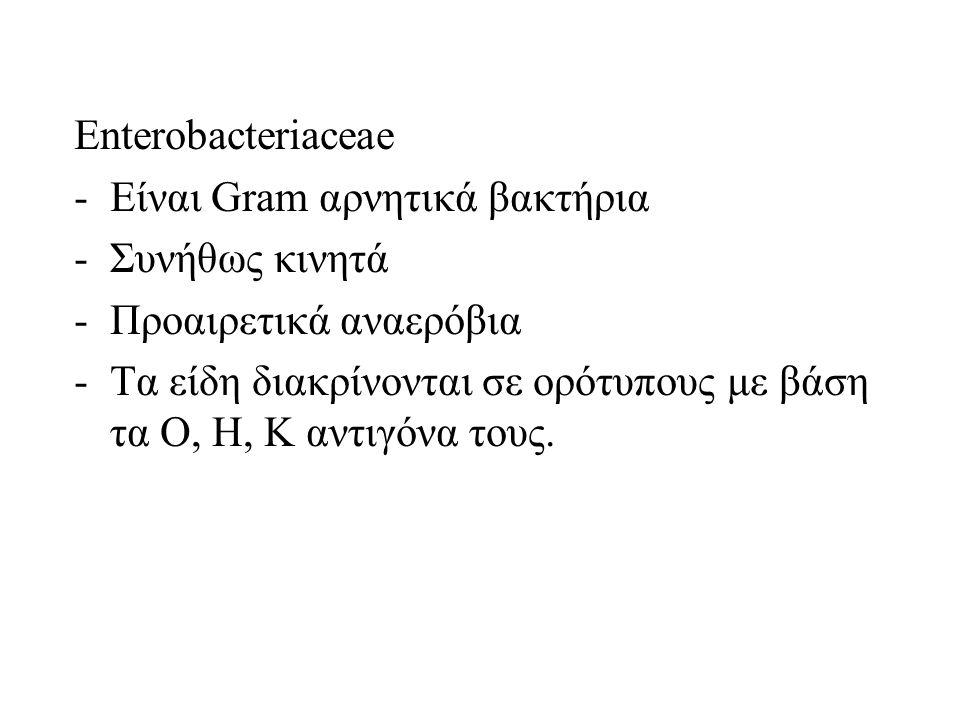 Enterobacteriaceae -Είναι Gram αρνητικά βακτήρια -Συνήθως κινητά -Προαιρετικά αναερόβια -Τα είδη διακρίνονται σε ορότυπους με βάση τα Ο, Η, Κ αντιγόνα