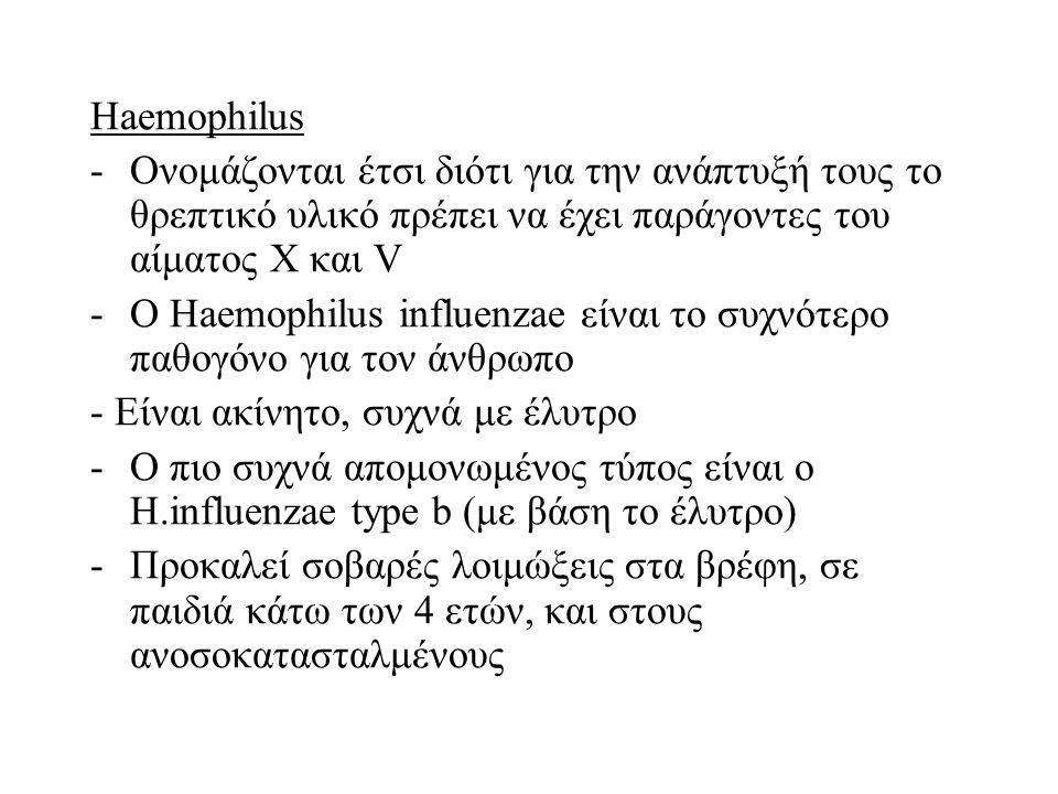 Haemophilus -Ονομάζονται έτσι διότι για την ανάπτυξή τους το θρεπτικό υλικό πρέπει να έχει παράγοντες του αίματος X και V -Ο Haemophilus influenzae είναι το συχνότερο παθογόνο για τον άνθρωπο - Είναι ακίνητο, συχνά με έλυτρο -Ο πιο συχνά απομονωμένος τύπος είναι ο Η.influenzae type b (με βάση το έλυτρο) -Προκαλεί σοβαρές λοιμώξεις στα βρέφη, σε παιδιά κάτω των 4 ετών, και στους ανοσοκατασταλμένους