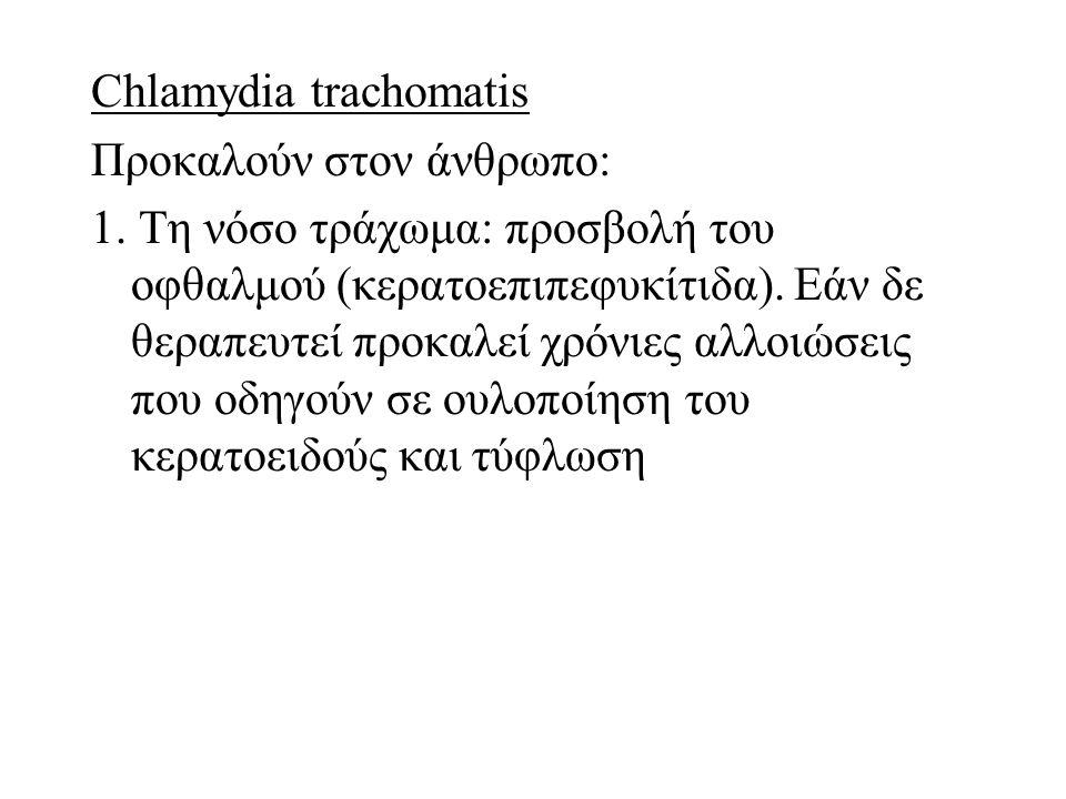 Chlamydia trachomatis Προκαλούν στον άνθρωπο: 1. Τη νόσο τράχωμα: προσβολή του οφθαλμού (κερατοεπιπεφυκίτιδα). Εάν δε θεραπευτεί προκαλεί χρόνιες αλλο