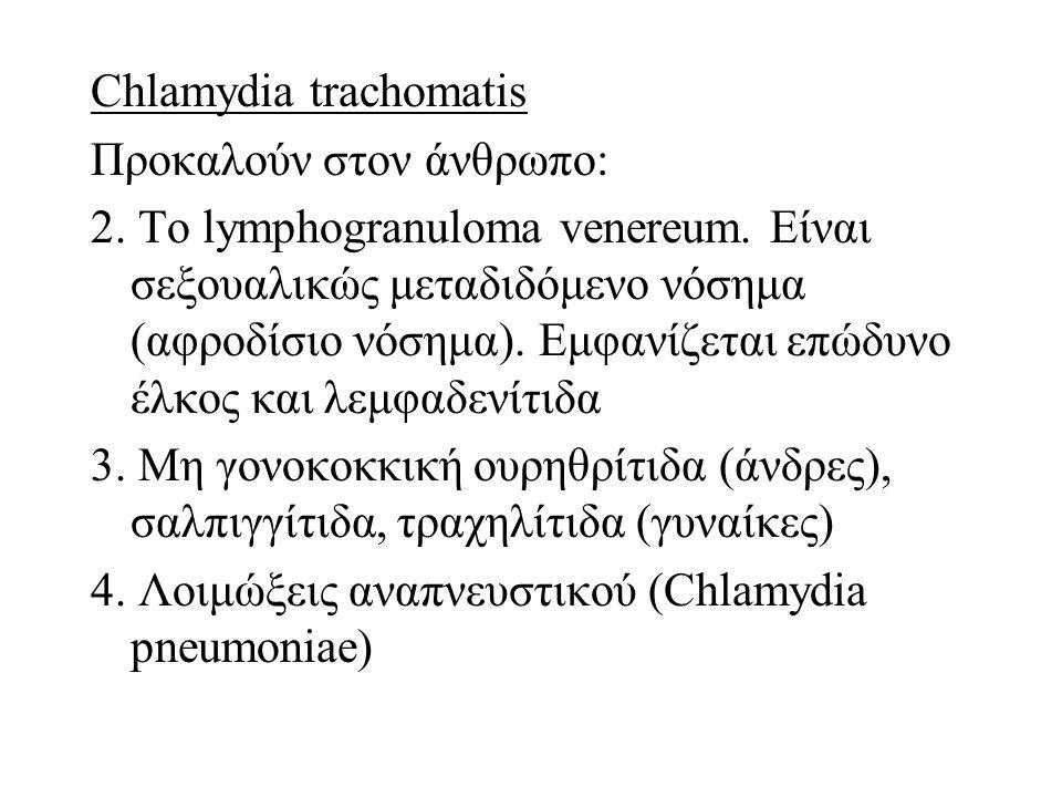 Chlamydia trachomatis Προκαλούν στον άνθρωπο: 2. Το lymphogranuloma venereum. Είναι σεξουαλικώς μεταδιδόμενο νόσημα (αφροδίσιο νόσημα). Εμφανίζεται επ