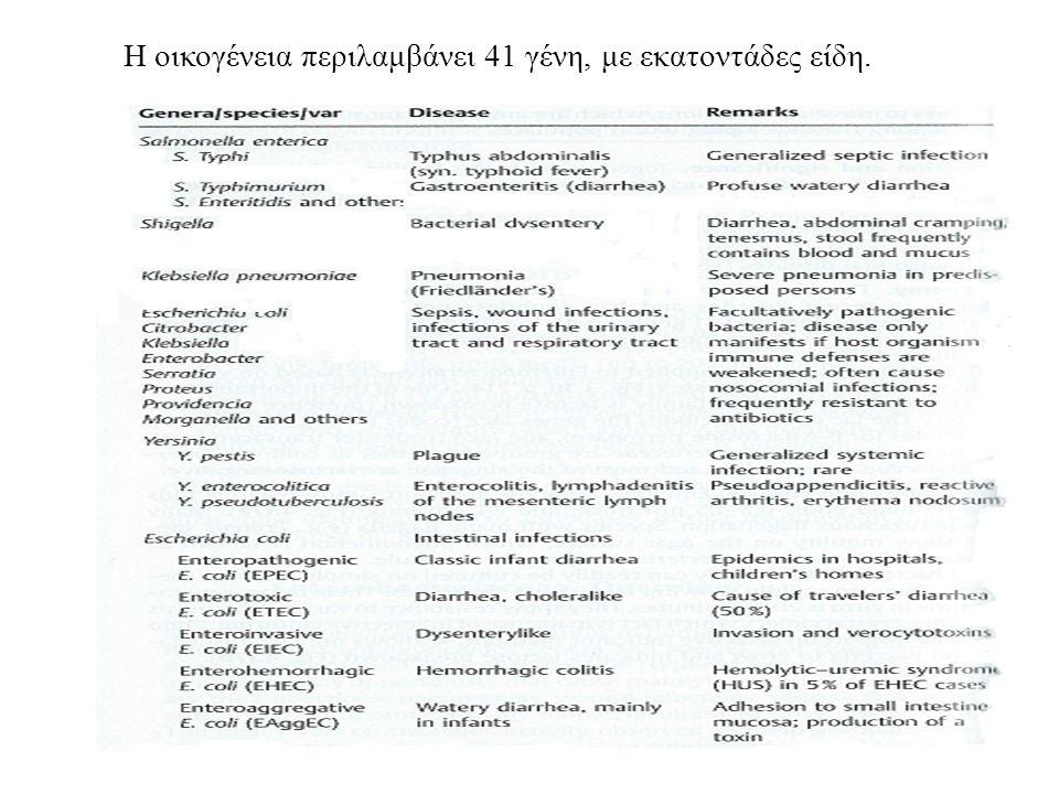 Ένα από τα χαρακτηριστικά γνωρίσματα στα μέλη αυτής της βακτηριακής οικογένειας είναι ότι ζυμώνουν τη λακτόζη (εκτός από Salmonellae, Shigellae)