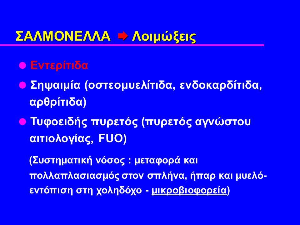 ΣΑΛΜΟΝΕΛΛΑ  Λοιμώξεις  Εντερίτιδα  Σηψαιμία (οστεομυελίτιδα, ενδοκαρδίτιδα, αρθρίτιδα)  Τυφοειδής πυρετός (πυρετός αγνώστου αιτιολογίας, FUO) (Συστηματική νόσος : μεταφορά και πολλαπλασιασμός στον σπλήνα, ήπαρ και μυελό- εντόπιση στη χοληδόχο - μικροβιοφορεία)
