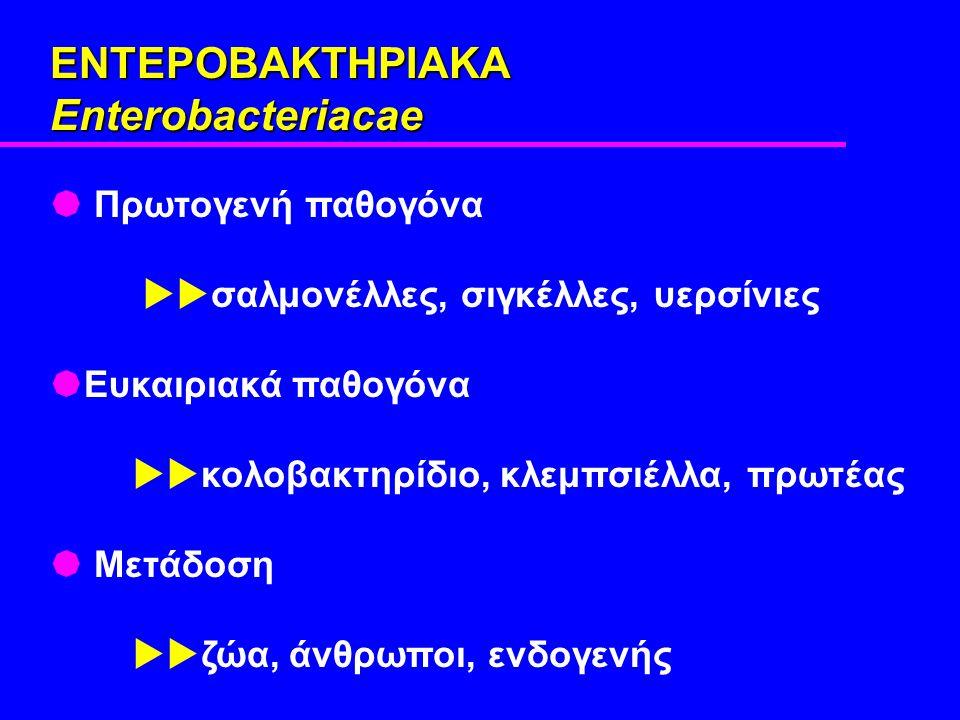 ΕΝΤΕΡΟΒΑΚΤΗΡΙΑΚΑ Enterobacteriacae  Πρωτογενή παθογόνα  σαλμονέλλες, σιγκέλλες, υερσίνιες  Ευκαιριακά παθογόνα  κολοβακτηρίδιο, κλεμπσιέλλα, πρωτέας  Μετάδοση  ζώα, άνθρωποι, ενδογενής