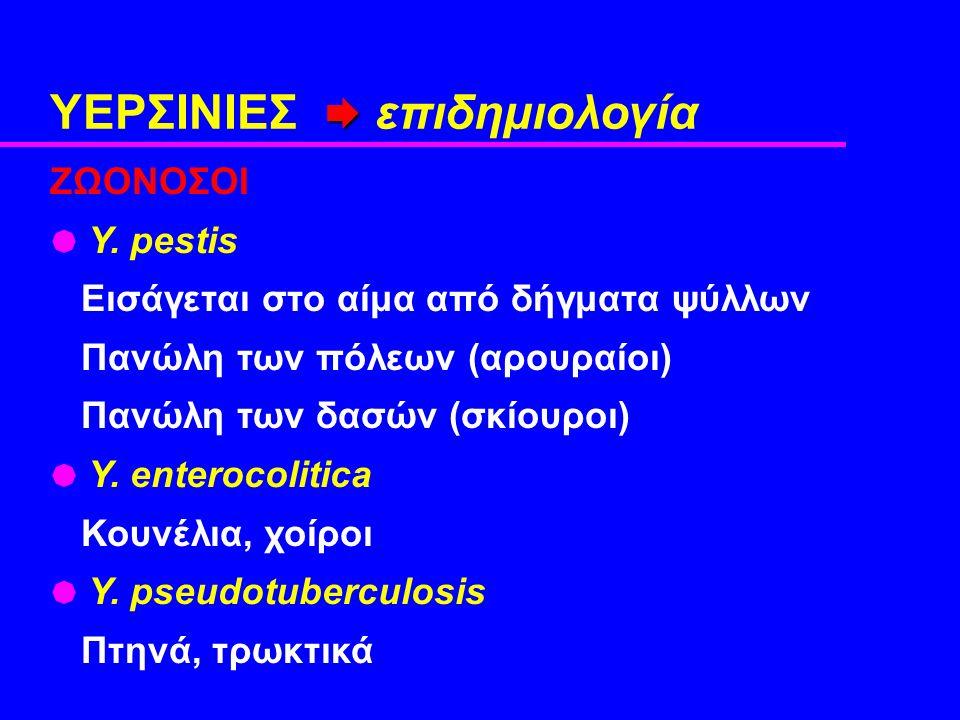  ΥΕΡΣΙΝΙΕΣ  επιδημιολογία ZΩΟΝΟΣΟΙ  Y.