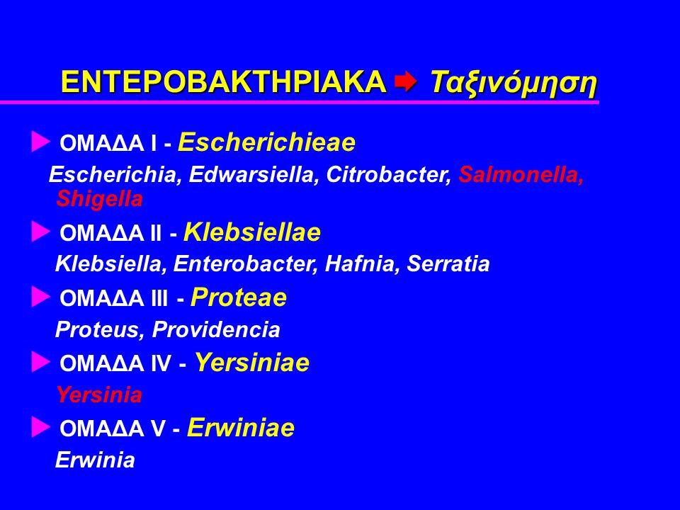 ΕΝΤΕΡΟΒΑΚΤΗΡΙΑΚΑ  Ταξινόμηση  ΟΜΑΔΑ Ι - Escherichieae Escherichia, Edwarsiella, Citrobacter, Salmonella, Shigella  OMAΔA ΙΙ - Klebsiellae Klebsiella, Enterobacter, Hafnia, Serratia  ΟΜΑΔΑ ΙΙΙ - Proteae Proteus, Providencia  ΟΜΑΔΑ ΙV - Yersiniae Yersinia  ΟΜΑΔΑ V - Erwiniae Erwinia