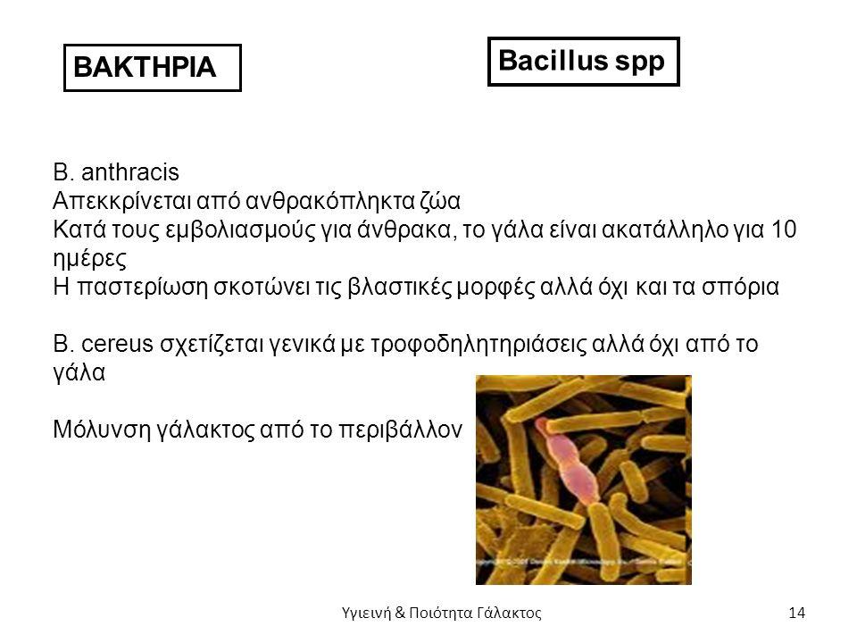 ΒΑΚΤΗΡΙΑ Bacillus spp B.