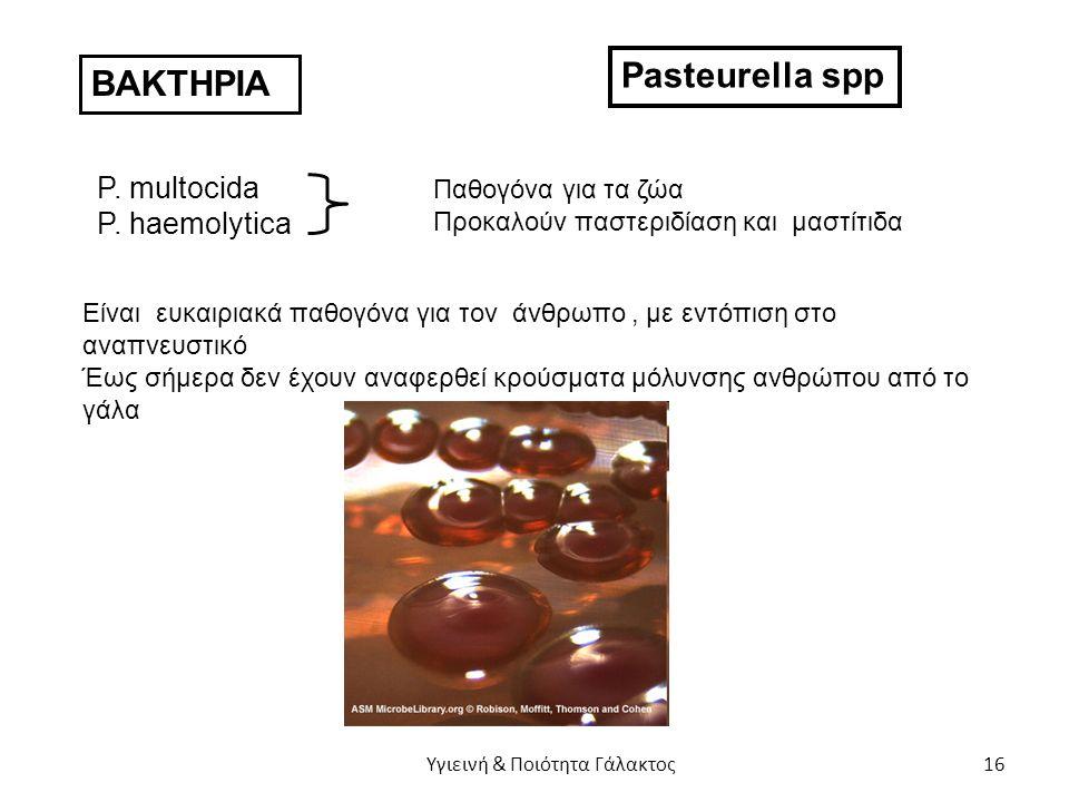 ΒΑΚΤΗΡΙΑ Pasteurella spp P. multocida P.