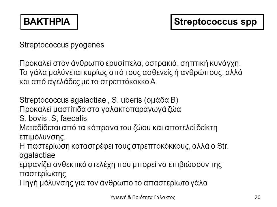 ΒΑΚΤΗΡΙΑ Streptococcus spp Streptococcus pyogenes Προκαλεί στον άνθρωπο ερυσίπελα, οστρακιά, σηπτική κυνάγχη.