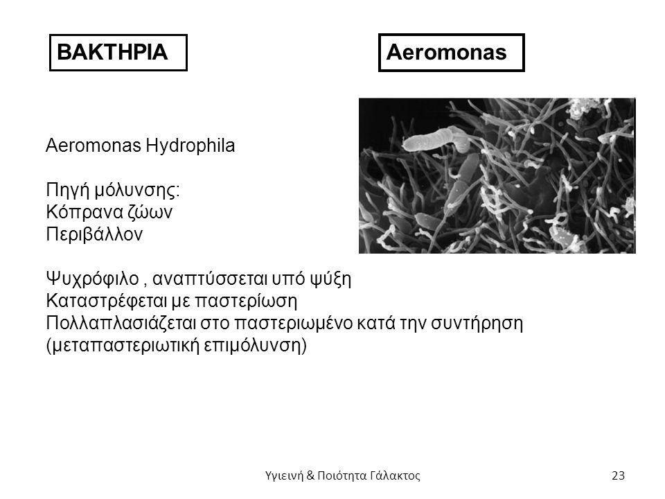ΒΑΚΤΗΡΙΑ Aeromonas Aeromonas Hydrophila Πηγή μόλυνσης: Κόπρανα ζώων Περιβάλλον Ψυχρόφιλο, αναπτύσσεται υπό ψύξη Καταστρέφεται με παστερίωση Πολλαπλασιάζεται στο παστεριωμένο κατά την συντήρηση (μεταπαστεριωτική επιμόλυνση) Υγιεινή & Ποιότητα Γάλακτος 23