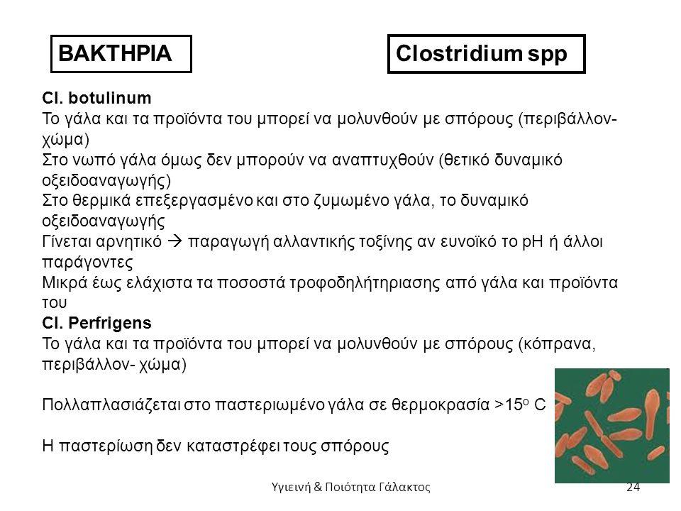 ΒΑΚΤΗΡΙΑ Clostridium spp Cl.