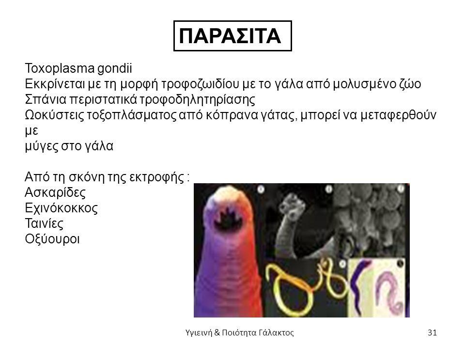 ΠΑΡΑΣΙΤΑ Toxoplasma gondii Εκκρίνεται με τη μορφή τροφοζωιδίου με το γάλα από μολυσμένο ζώο Σπάνια περιστατικά τροφοδηλητηρίασης Ωοκύστεις τοξοπλάσματος από κόπρανα γάτας, μπορεί να μεταφερθούν με μύγες στο γάλα Από τη σκόνη της εκτροφής : Ασκαρίδες Εχινόκοκκος Ταινίες Οξύουροι Υγιεινή & Ποιότητα Γάλακτος 31