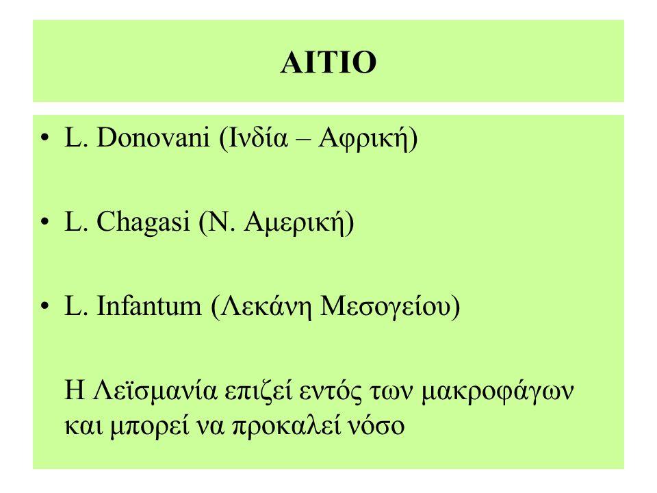 ΑΙΤΙΟ L. Donovani (Ινδία – Αφρική) L. Chagasi (Ν. Αμερική) L. Infantum (Λεκάνη Μεσογείου) Η Λεϊσμανία επιζεί εντός των μακροφάγων και μπορεί να προκαλ
