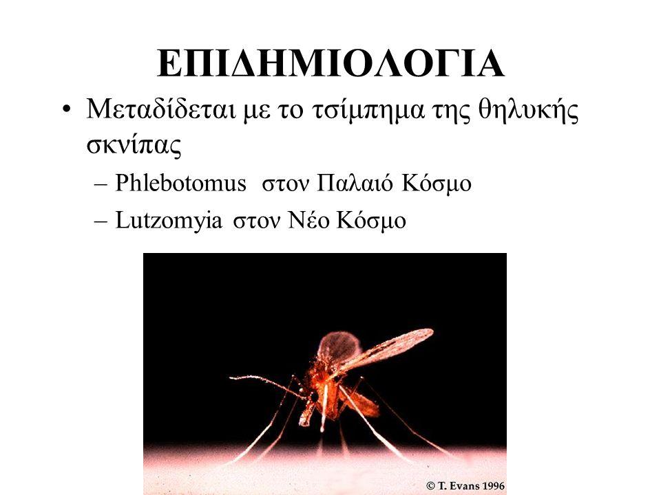 ΕΠΙΔΗΜΙΟΛΟΓΙΑ Μεταδίδεται με το τσίμπημα της θηλυκής σκνίπας –Phlebotomus στον Παλαιό Κόσμο –Lutzomyia στον Νέο Κόσμο
