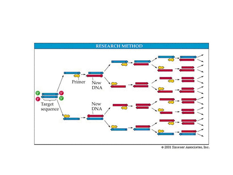Εκτέλεση της αντίδρασης PCR Για να γίνει μια αντίδραση PCR απαιτούνται δύο εκκινητές τα οποία κατευθύνουν τα σημεία έναρξης αντιγραφής, το ένζυμο (μια DNA πολυμεράση) και ένα μίγμα 4 δεόξυ-νουκλεοτιδίων (dNTPs = dATP + dTTP + dCTP +dGTP).