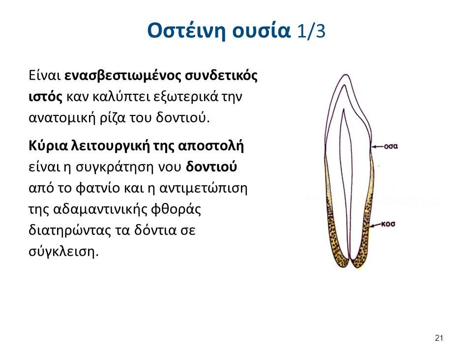 Οστέινη ουσία 1/3 Είναι ενασβεστιωμένος συνδετικός ιστός καν καλύπτει εξωτερικά την ανατομική ρίζα του δοντιού.