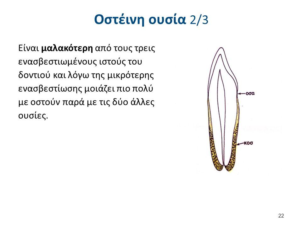 Οστέινη ουσία 2/3 Είναι μαλακότερη από τους τρεις ενασβεστιωμένους ιστούς του δοντιού και λόγω της μικρότερης ενασβεστίωσης μοιάζει πιο πολύ με οστούν παρά με τις δύο άλλες ουσίες.
