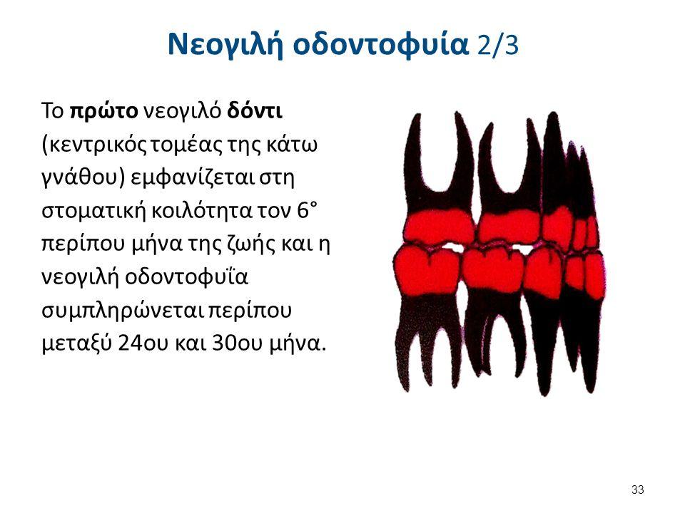 Νεογιλή οδοντοφυία 2/3 Το πρώτο νεογιλό δόντι (κεντρικός τομέας της κάτω γνάθου) εμφανίζεται στη στοματική κοιλότητα τον 6° περίπου μήνα της ζωής και η νεογιλή οδοντοφυΐα συμπληρώνεται περίπου μεταξύ 24ου και 30ου μήνα.