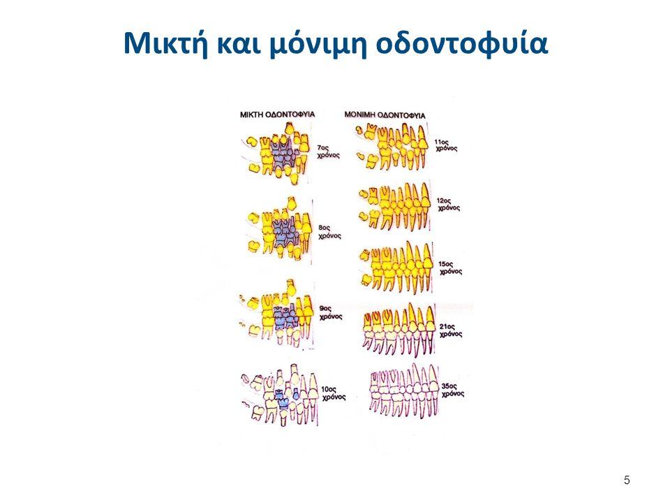 Μικτή και μόνιμη οδοντοφυία 5