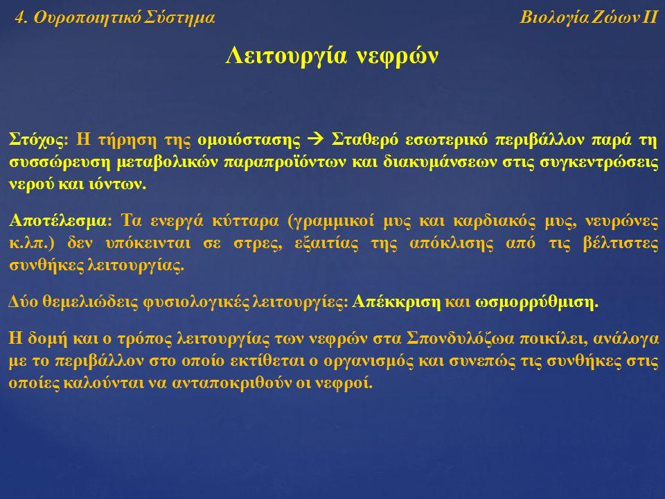 Βιολογία Ζώων ΙΙ5.Ερειστικό Σύστημα Δερματοκράνιο 3.
