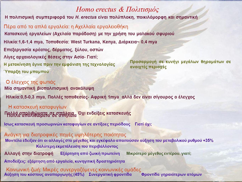 Homo erectus & Πολιτισμός Η πολιτισμική συμπεριφορά του H.