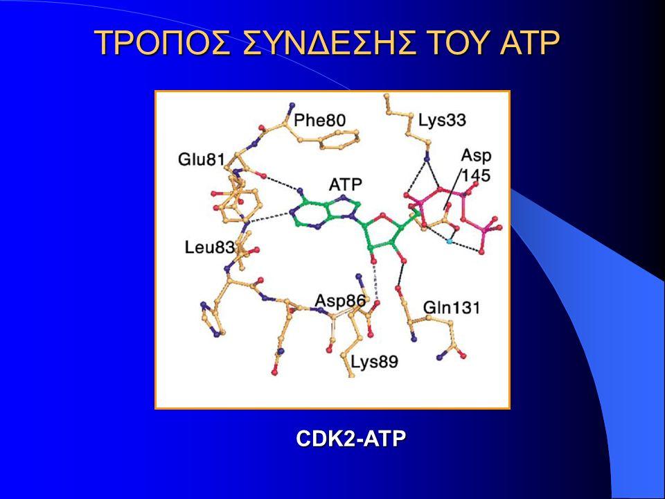 ΤΡΟΠΟΣ ΣΥΝΔΕΣΗΣ ΤΟΥ ATP CDK2-ATP